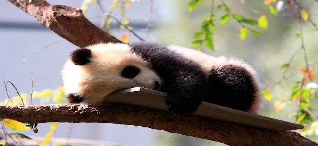 Panda dos and don'ts