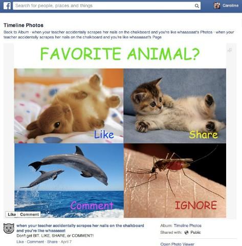 Facebook Algorithm1