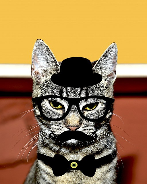 cat-disguise