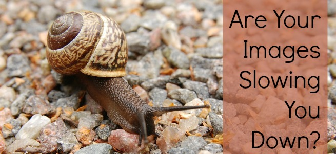 images slow snail
